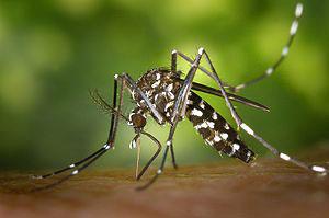 25 - Die exotische Krankheiten riskieren Sie auf einer Urlaubsreise